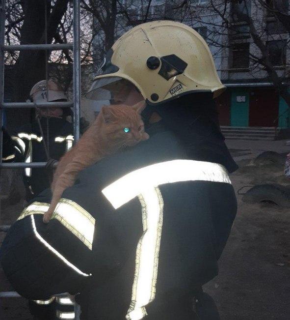 Олександрійські рятувальники врятували домашнього улюбленця