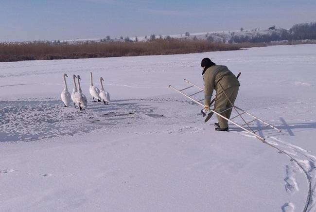 У Приютівській громаді рятувальники надали допомогу лебедям