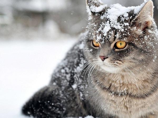 На Кіровоградщину знову йдуть морози та сніг