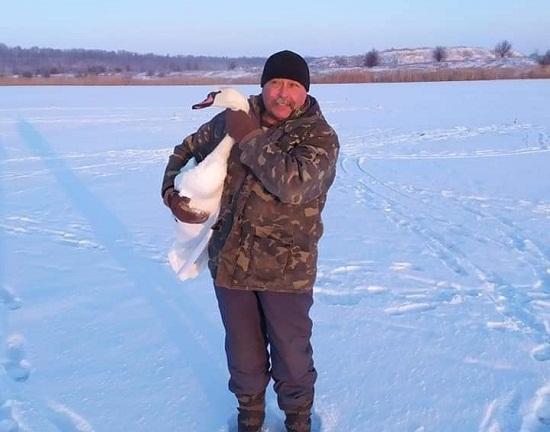 На Олександрійщині шукають прихисток для лебедя
