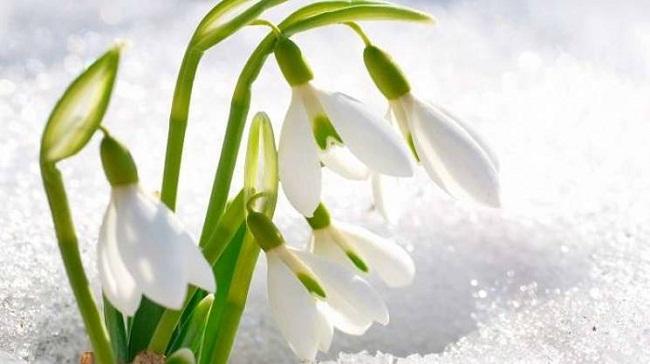 Коли весна прийде в Україну