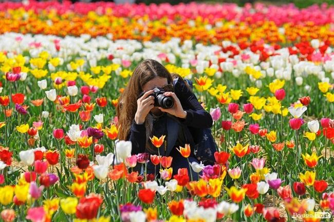 Тюльпановий рай: у Дендропарку повідомили коли відкриють сезон