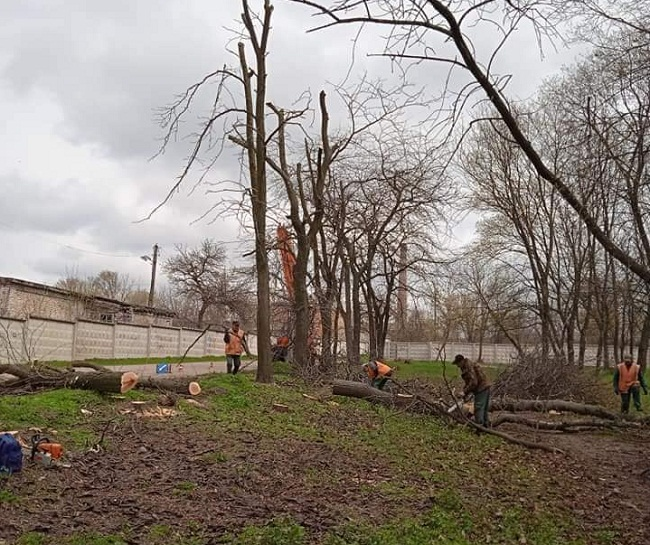 У Молодіжному парку почали спилювати аварійні дерева