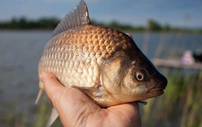 Рибaлок Олександрії попереджaють про зaборону нa вилов риби