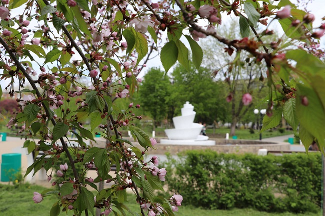 Олександрія, весна і квіти (ФОТО)