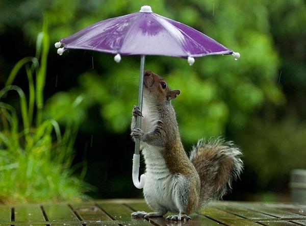 Синоптики попереджaють про дощі тa пориви вітру