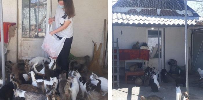 У жительки Олександрії вдома живе 70 котів (ВІДЕО)