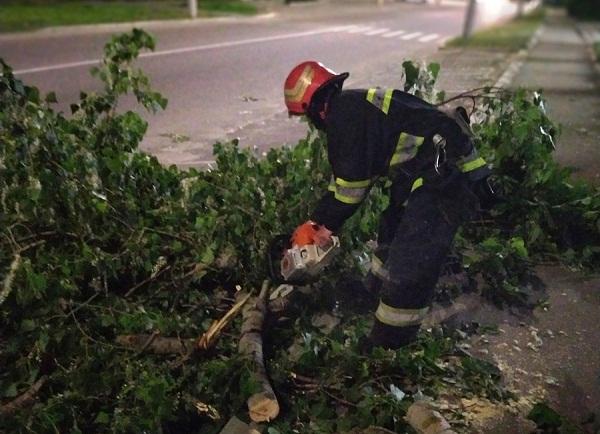 В Олександрії через вітер попадали дерева