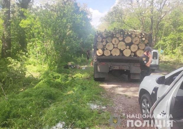 На Олександрійщині «чорний лісоруб» спиляв більше сотні дерев