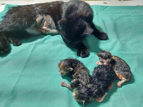 Ветеринари Олександрії допомогли кішці з пологами