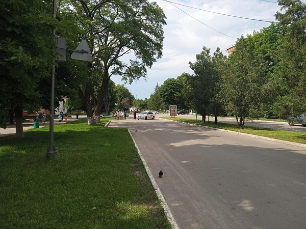 Через аварійне дерево в Олександрії перекрили рух проспектом