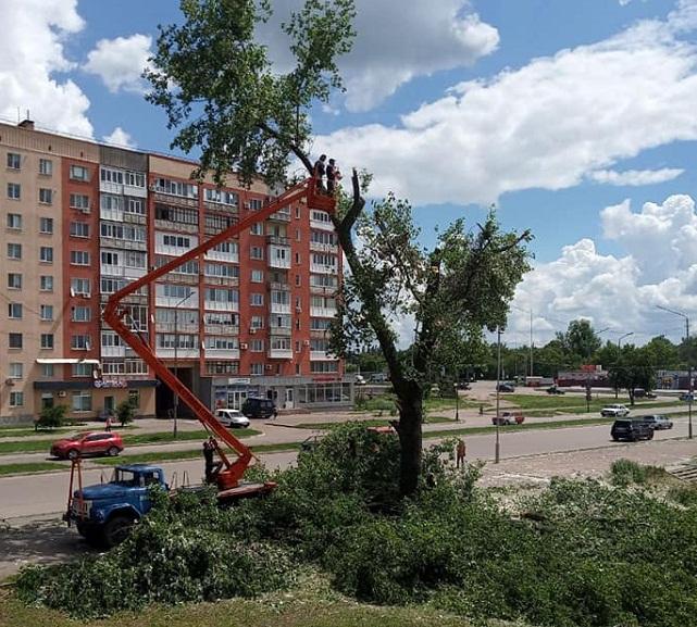 В Олександрії комунальники ліквідували аварійне дерево