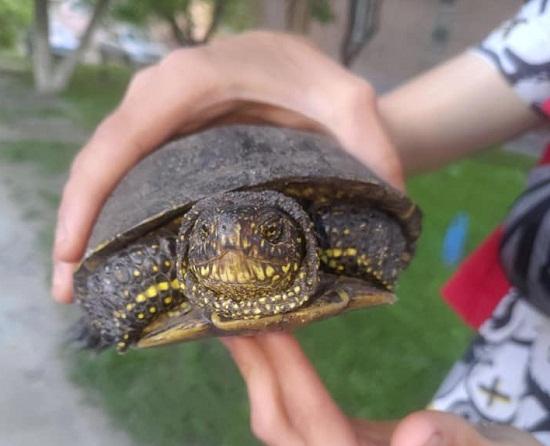 Олександрійські підлітки врятували черепаху