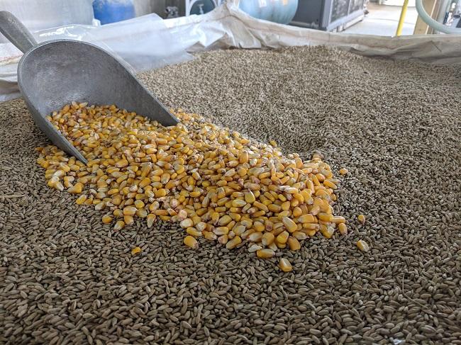 На Кіровоградщині злочинна група реалізовувала фальсифіковане насіння для посіву