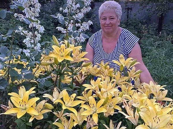 Понад 500 лiлiй розквiтли на подвiр'ї жительки Олександрійщини