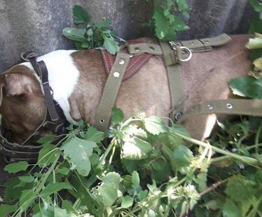 Олександрійці повідомляють про вбивство собаки на очах у 10-річної дитини