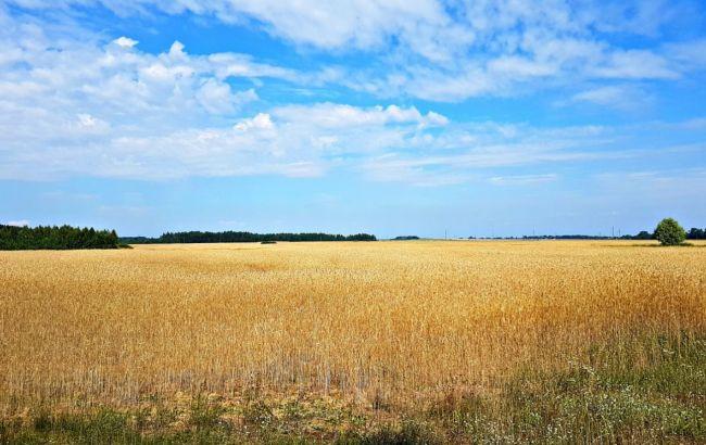 Ринок землі в Україні: скільки продали в Кіровоградській області?