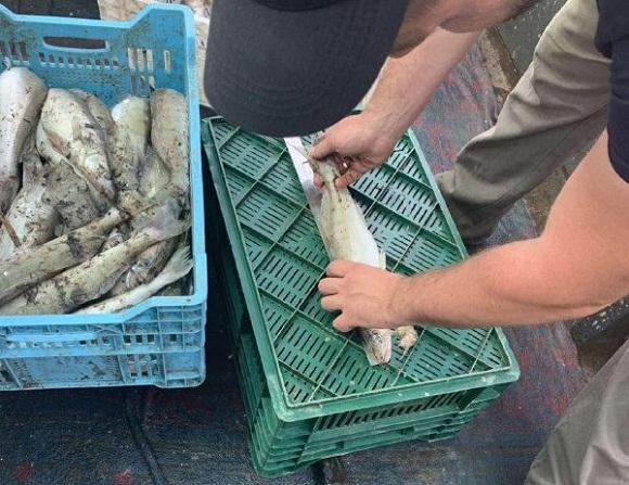 На Олександрійщині рибалка наловив судака на мільйон гривень