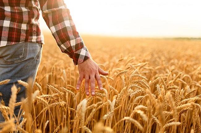 В Україні стартував продаж сільськогосподарської землі