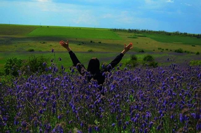 На Кіровоградщині розквітло лавандове поле