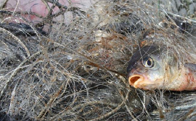 Чоловіка засудили за незаконний рибний промисел