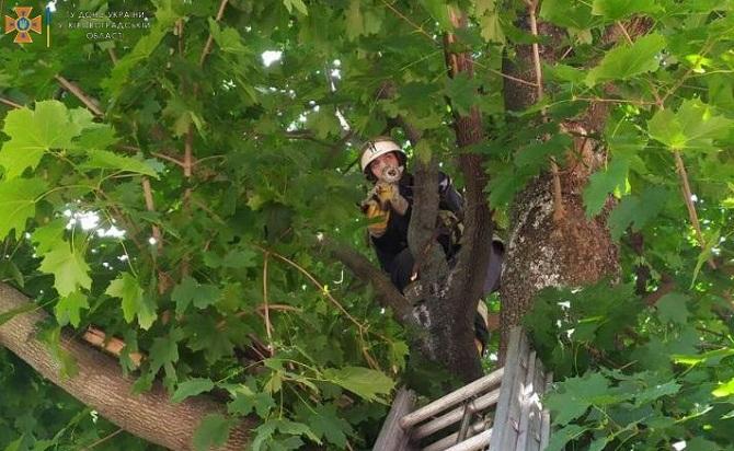 Олександрійські рятувальники зняли з дерева кошеня