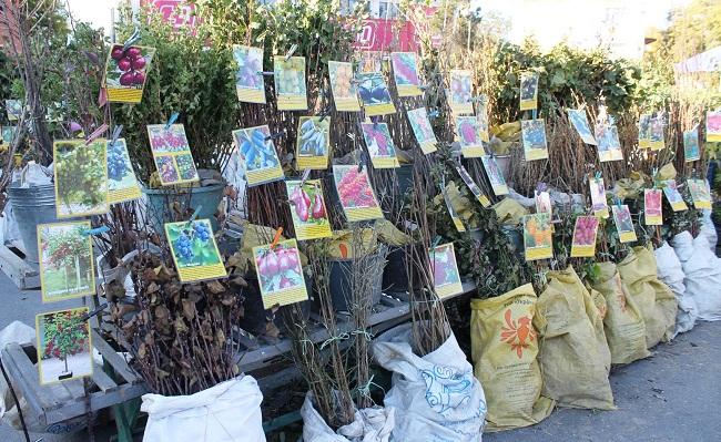 В Олександрії пройде ярмарок «Все для саду та городу»