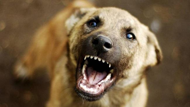 У середмісті Олександрії дитину покусали бродячі собаки