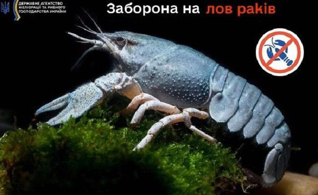 В Україні заборонили вилов раків
