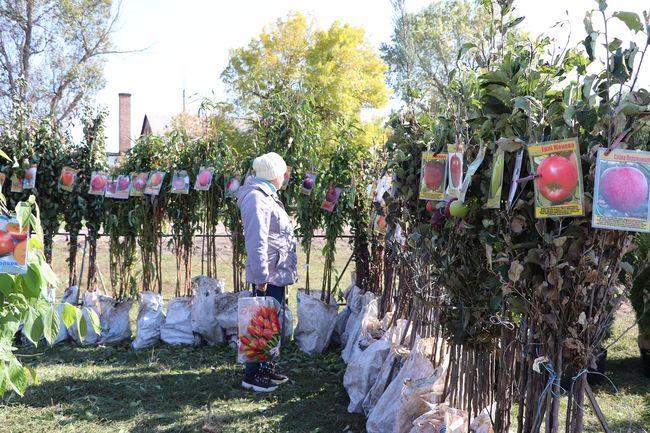 В Олександрії працює ярмарок «Все для саду та городу»
