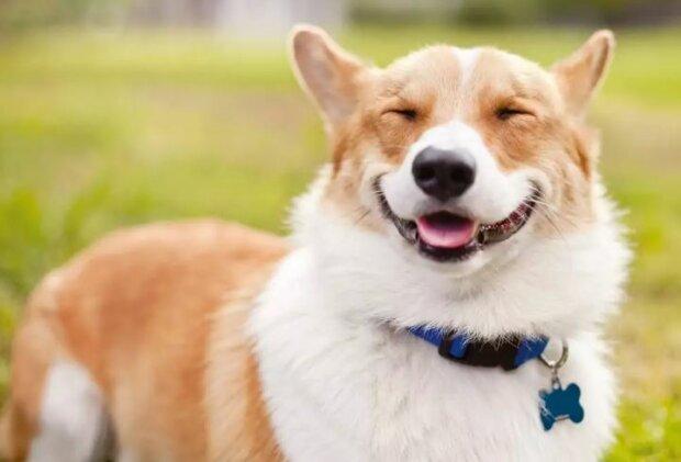 У МОЗ просять в додатку для самоізоляції не фотографувати замість себе собак