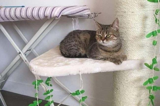 Безпритульна кішка з Кіровоградщини поїхала жити до Парижа