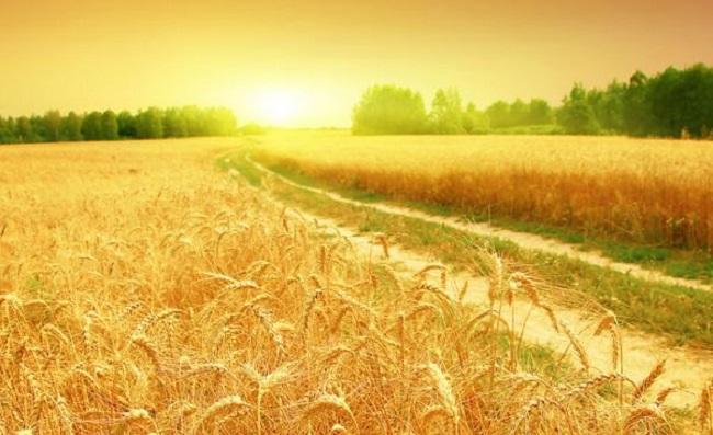 На Кіровоградщині можна купити чи продати більш ніж мільйон гектарів землі